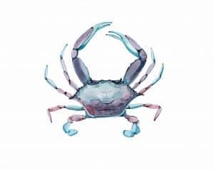 Don T Miss Soft Shell Crab Season Hilton Head Area